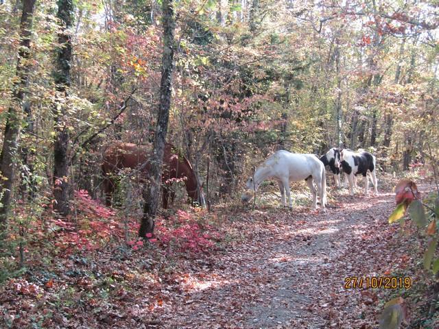 В горы Геленджика на лошадях, осень